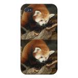 Panda roja iPhone 4 carcasas