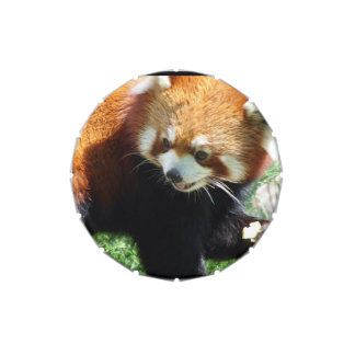 Panda roja latas de dulces