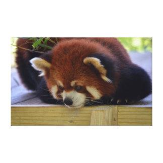 Panda roja lona envuelta para galerias