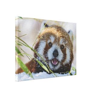 Panda roja impresión en lienzo estirada