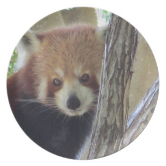 Panda roja linda plato para fiesta