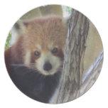 Panda roja linda platos de comidas