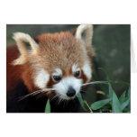 Panda roja, parque zoológico de Taronga, Sydney, A Tarjeta De Felicitación