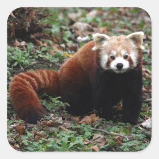 Panda roja colcomanias cuadradas personalizadas