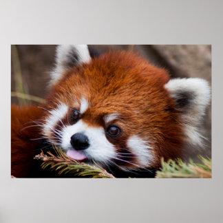 Panda roja poster