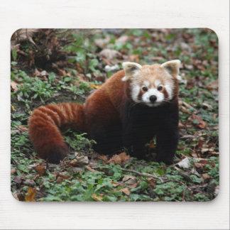 Panda roja alfombrilla de ratones