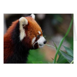 Panda roja felicitaciones