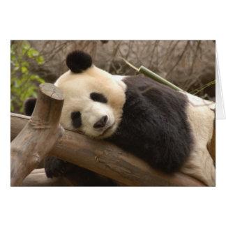 Panda SD010 Greeting Card