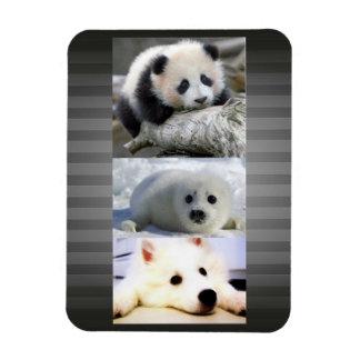 Panda-Seal-Mini American Eskimo Magnet