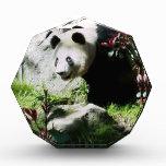 Panda Smile Acrylic Award