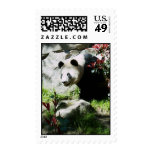 Panda Smile Postage Stamps