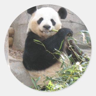 Panda Snack Classic Round Sticker