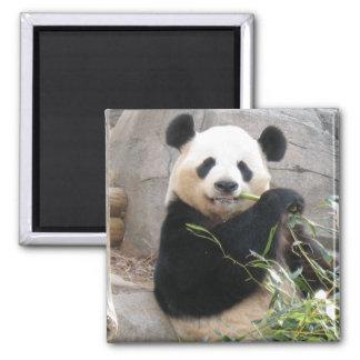 Panda Snack Magnet