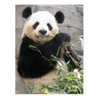 Panda Snack Postcard