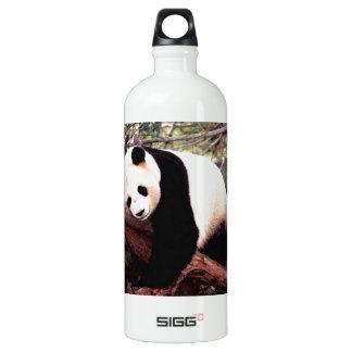 Panda soñolienta