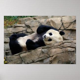 panda soñolienta póster