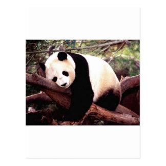 Panda soñolienta tarjetas postales
