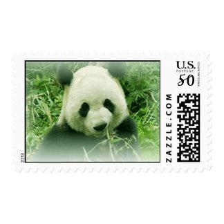 Panda Stamps