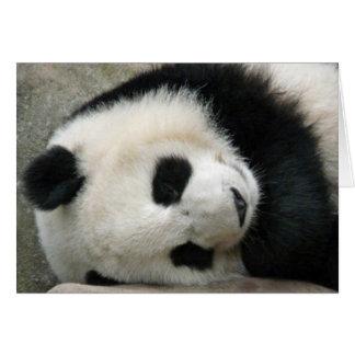 Panda Felicitaciones