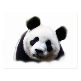 Panda Postales