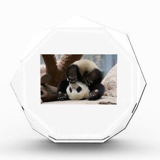 Panda Upside Down Award