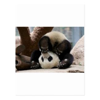 Panda Upside Down Postcard