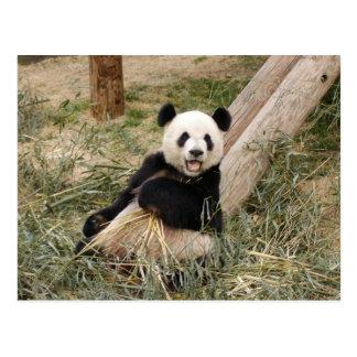 PandaM001 Postcard