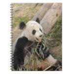PandaM002 Libro De Apuntes Con Espiral