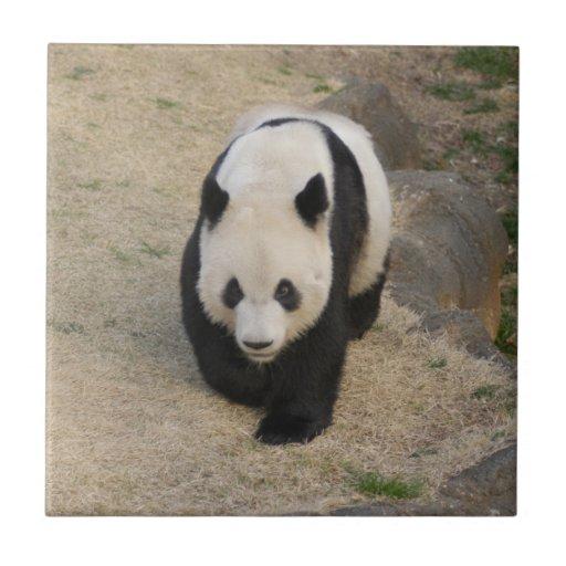 PandaM003 Azulejo Cuadrado Pequeño