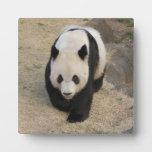 PandaM003 Placas