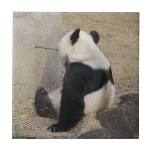 PandaM004 Azulejo Cuadrado Pequeño