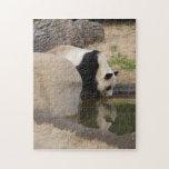 PandaM006 Puzzle