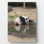 PandaM007 Placas