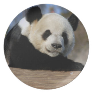 PandaM011 Plate