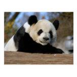 PandaM011 Tarjetas Postales