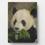 PandaM014 Placa De Madera
