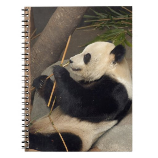 PandaM015 Libros De Apuntes