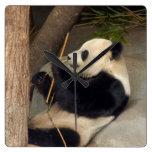 PandaM015 Wallclocks