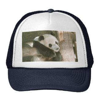 PandaM016 Trucker Hat