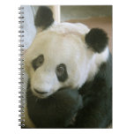 PandaM017 Cuadernos