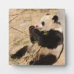 PandaM020 Placa