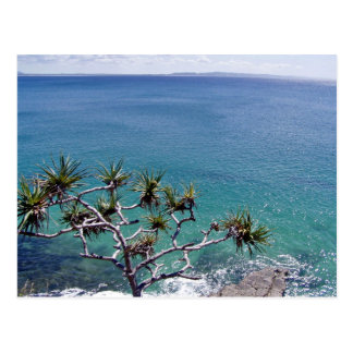 Pandanus Trees Over The Ocean Postcards