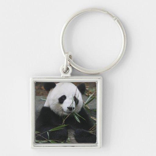 Pandas gigantes en la protección de la panda gigan llaveros personalizados