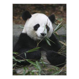 Pandas gigantes en la protección de la panda gigan arte fotográfico