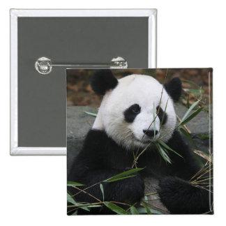 Pandas gigantes en la protección de la panda gigan pins