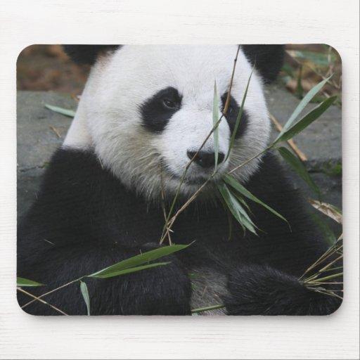 Pandas gigantes en la protección de la panda gigan alfombrillas de ratón
