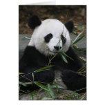 Pandas gigantes en la protección de la panda gigan felicitaciones