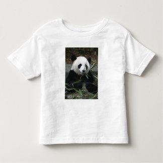 Pandas gigantes en la protección de la panda playera