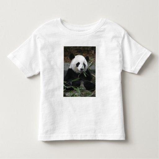 Pandas gigantes en la protección de la panda playera de bebé