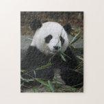 Pandas gigantes en la protección de la panda puzzle